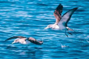 Biodiversità: l'Ue amplia la rete Natura 2000