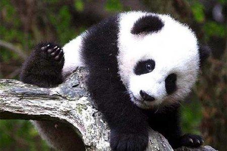 WWF: a Natale adotta una specie a rischio