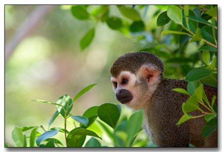 Amazzonia regno della biodiversità: 1200 nuove specie in 10 anni
