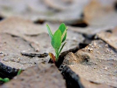 2011, dal Wwf un bilancio ambientale. L'Italia frena ma gli italiani no
