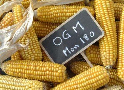 OGM, l'Unione Europea sta con Monsanto
