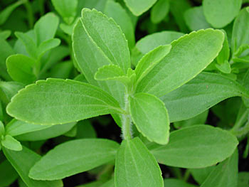 Stevia: sul mercato un dolcificante naturale alternativo allo zucchero