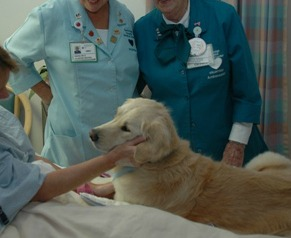 Cani in ospedale? Il Tribunale di Varese dice sì