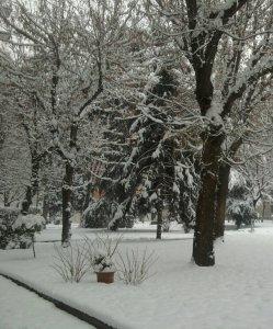 Gelo e neve a febbraio. La stupidità umana è contro (la) natura