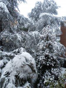 Neve e gelo. Quando la natura diventa 'una drammatica calamità'