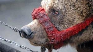 Circo. La Grecia prima in Europa a vietare gli animali negli spettacoli