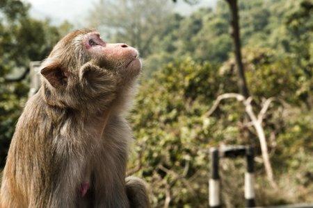Fukushima: scimmie e cinghiali per testare la radioattività