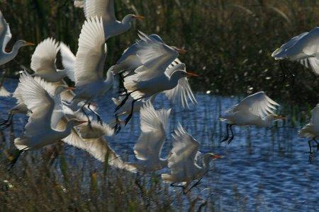 Bruxelles apre un'indagine sul bracconaggio nel Delta del Po
