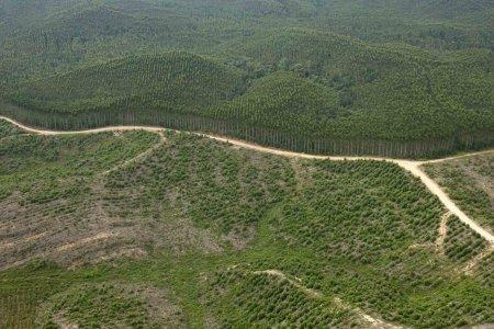 Crimini ambientali, Greenpeace incastra APP e i suoi clienti
