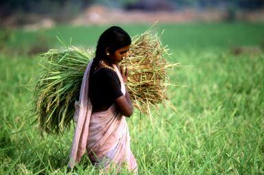 Terra e sovranità alimentare. Arrivano le linee guida volontarie
