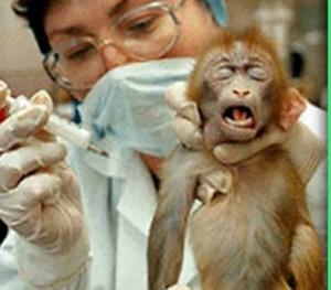 Nasce un nuovo centro recupero per animali da laboratorio