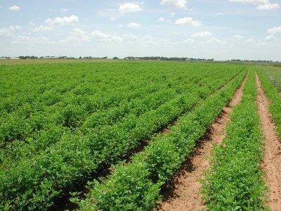 Imu agricola. Per AIAB le modifiche sono ancora insufficienti