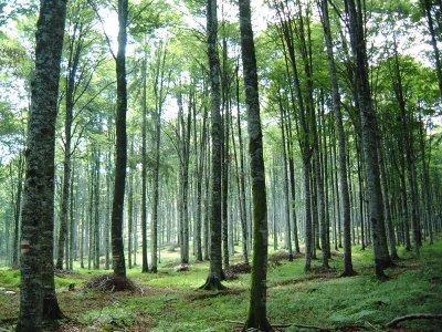 In aumento le foreste in Italia, impariamo a tenercele