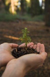 Giornata Mondiale della Terra 2012. L'obiettivo è mobilitare il Pianeta