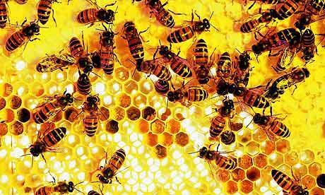 Moria di api in Valtellina, avvelenati oltre 300 alveari
