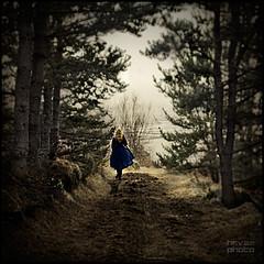 Una ragazza nel bosco, cronache oltre il frastuono