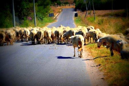 Lavoro: contro la crisi, i giovani tornano a fare i pastori