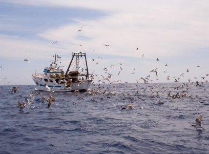 Consumi: in Italia abbiamo già finito il pesce di tutto l'anno