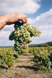 Agricoltura biologica, una questione di interesse strategico nazionale