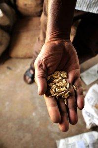 Il lato oscuro del cotone OGM, a Terra Futura 'Behind the label'