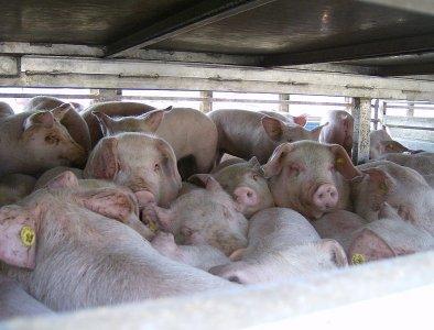 Trasporto animali e caccia in deroga, l'Ue si impegna