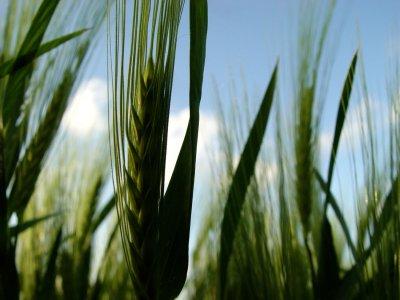 Diritti dei contadini: l'Aiab lancia un appello al Governo