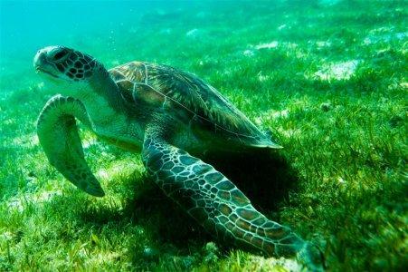 Oceani vicini al collasso: le azioni per salvarli