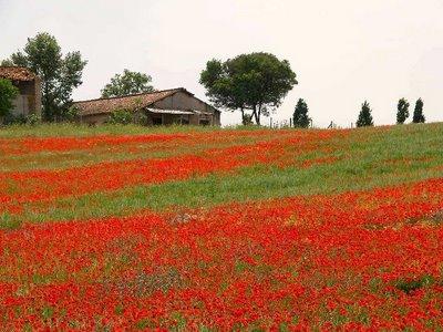 Attacco al polmone verde di Roma, l'agro a rischio cementificazione