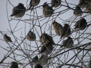 In Europa 300 milioni di uccelli in meno