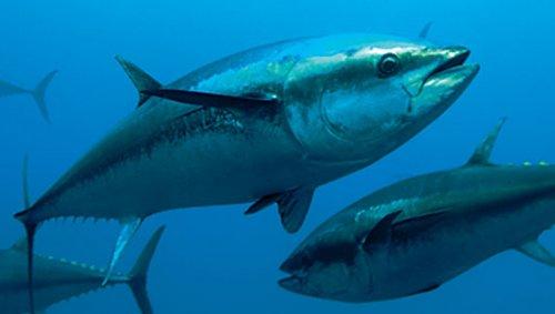 Se il mare va a morire. Pesca, inquinamento e riscaldamento globale