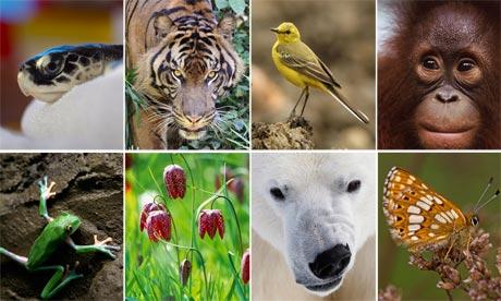 Nagoya e l'intesa sulla biodiversità