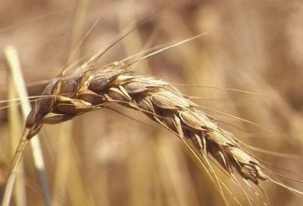Il grano e la malerba, un libro che parla di resistenza