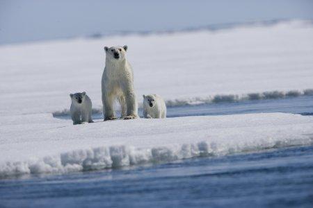I ghiacci dell'Artico scendono al minimo storico
