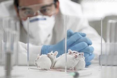 Test cosmetici su animali: intervista all'azienda L'Oréal