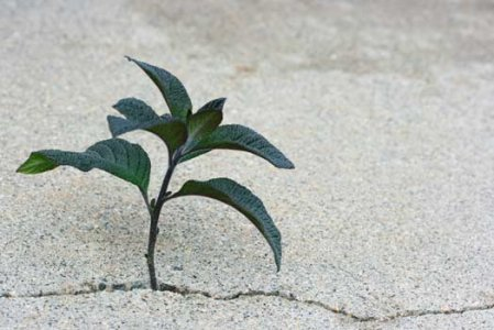 Stop al consumo di suolo: via libera al ddl contro la cementificazione