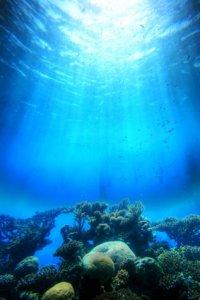 Acidificazione degli oceani, il 'gemello malefico' del riscaldamento globale