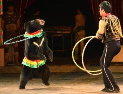 La guerra agli animalisti e l'antropocentrismo in tv
