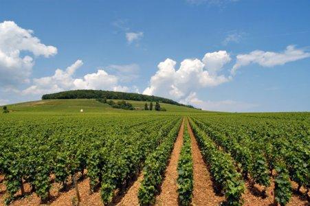 Politica Agricola Comune, quali conseguenze?