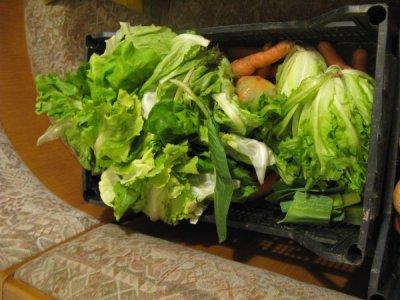 Re-Food, a Bolzano un progetto di recupero del cibo