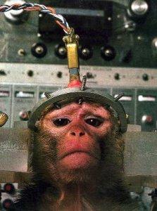 Vivisezione, l'Ue dice sì al massacro di randagi e scimpanzé