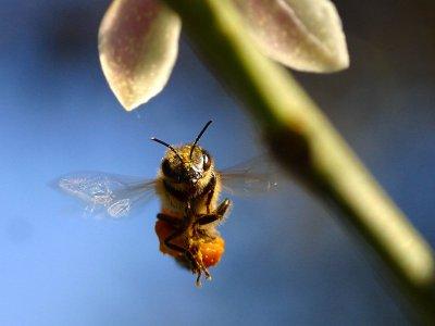 Moria api: Ue limiterà l'uso di pesticidi tossici