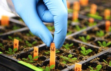 Belluno: sementi OGM per coltivare 80.000 ettari?