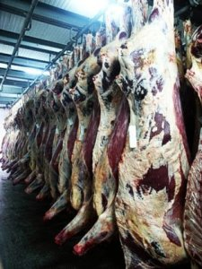 Acido lattico per decontaminare carcasse bovine: sì dell'Ue