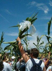 Gli OGM avanzano in Europa. L'Italia può ancora scegliere?