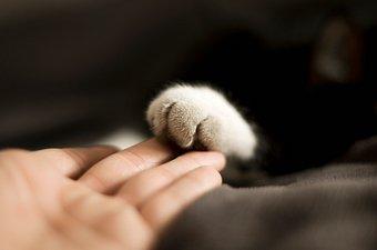 Etologia relazionale, perché accarezzare alcuni animali e mangiarne altri?