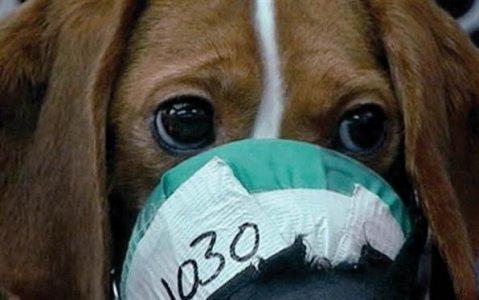 L'Ue mette al bando i cosmetici testati sugli animali
