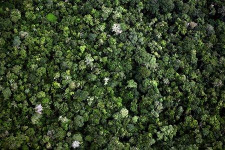 Foreste, fonte di vita e patrimonio di biodiversità