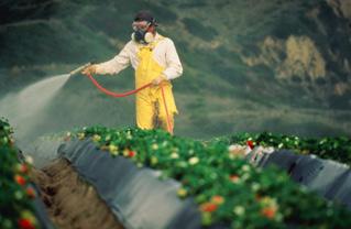 Pesticidi, Ispra: