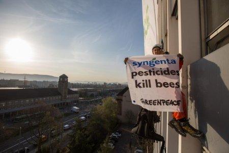 Greenpeace in azione: