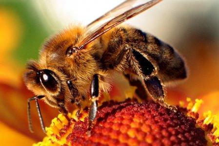 Api: passo avanti Ue verso il bando dei pesticidi killer